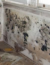 Mold Removal. A flood-damaged home needs special care to remove mold safely and effectively. Mold begins to grow on materials that stay wet longer than two or three days. The longer mold grows, the greater the health hazard it is and the harder it is to control. (PDF Format Only)