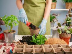 Saksı Bitkilerin Bakımı Nasıl Yapılmalı? Garden Supplies, Garden Tools, Runs For Cookies, Transplanting Plants, Winter Crops, Organic Compost, Crop Rotation, Garden Quotes, How To Start Running