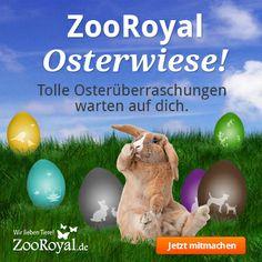 Habt ihr euch schon durch unsere Osterwiese geklickt? http://www.zooroyal.de/aktionen/osterwiese/  In jedem Osterei, dass wir auf unserer Osterwiese für euch versteckt haben, wartet eine tolle Überraschung darauf, von euch und eurem Haustier entdeckt zu werden. :)