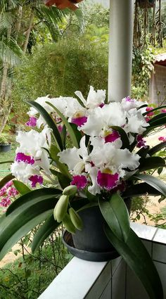You'll be impressed with all the Kinds Of Tropical Flowers and their exotic beau. Flowers Nature, Exotic Flowers, Tropical Flowers, Amazing Flowers, Beautiful Flowers, Cattleya Orchid, Cymbidium Orchids, Orchids Garden, Orchid Plants