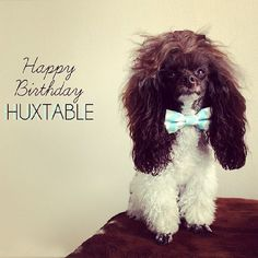 Dog Birthday Photo Ideas. #dogbirthday #bowtie #dashingdog