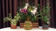 By Sotie Eventos Décor sotie.com.br Glass Vase, Plants, Home Decor, Events, Decoration Home, Room Decor, Plant, Home Interior Design, Planets