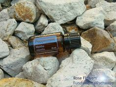 Peppermint! An amazing and fresh essential oil. Steam distilled from the peppermint leaf peppermint plant is a hybrid of watermint and spearmint. I've often heard peppermint essential oil described as a candy cane because of how amazing and crisp it smells.   What is your favorite way to use peppermint?  #essentialoils