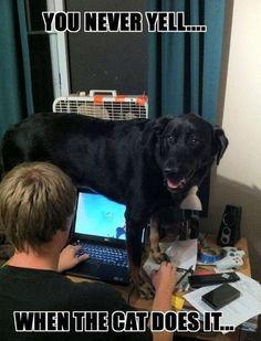 30 Funny animal captions - part 7 (30 pics) #funnydogquotes