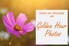 This is a short video explaining what golden hour is and showing you why golden hour is the best time to take photos and giving some examples #goldenhour #learnphotography #lockdownlearning #photographytips #beginnerphotography #lockdownideas When Is Golden Hour, Golden Hour Photos, Free Photography, Photography Lessons, Photography For Beginners, Improve Yourself, Good Things, Learning, Photography Classes