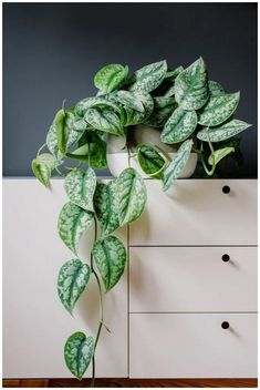 ❤40 The Best Indoor Plants that Don't Need Sunlight You Will Like It #homedecor #garden #indoorplants | gaming.me