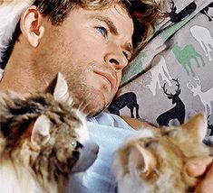 3 Gorgeous Cats - Chris Hemsworth...oh how I wish I was one of those cats!!