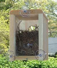 see cute little bird babies hatch