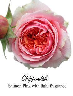 Chippendale garden spray rose