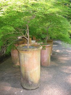 ** Japanese dwarf maples in nice clay pots. Garden Oasis, Garden Spaces, Garden Pots, Patio Trees, Potted Trees, Container Plants, Container Gardening, Small Gardens, Outdoor Gardens
