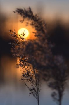 Peace & Love Photo is part of Beautiful moon - What a wonderful world, full of delights for the eyes and the soul Sunset Photography, Landscape Photography, Image Nature, Beautiful Moon, Sunset Photos, Love Photos, Nature Wallpaper, Nature Pictures, Moon Pictures