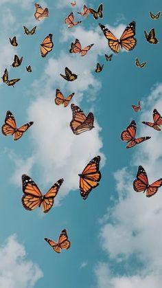 Butterfly in Sky aesthetic wallpaper Wallpaper Pastel, Butterfly Wallpaper Iphone, Cute Patterns Wallpaper, Trippy Wallpaper, Summer Wallpaper, Iphone Background Wallpaper, Aesthetic Pastel Wallpaper, Aesthetic Wallpapers, Retro Wallpaper