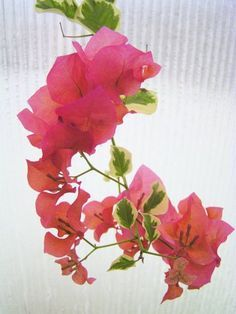 Check out Watercolor bougainvillea branch by Astromonkey on ...