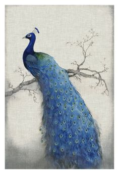 Peacock Blue II Giclee Print by Tim O'toole at Art.com