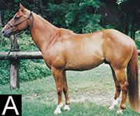Evaluate the conformation of these three geldings and place them in your order of preference, then see how your choices compare to our expert judge's. Plus, learn how to get your horse into Horse &