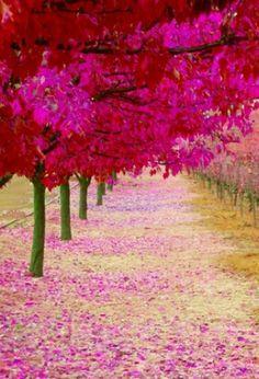 Tree Tunnels On Pinterest