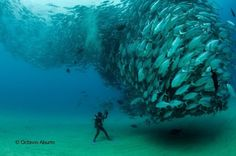 An amazing picture, taken near Cabo Pulmo. http://ngm.nationalgeographic.com/ngm/photo-contest/2012/entries/188944/view/