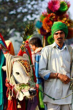 "'Boom Boom mattukarans"" (fortune teller with bull), India  'Boom Boom ""(mattukarans cartomante com touro), Índia"