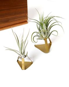 DIY Metal Air Plant...