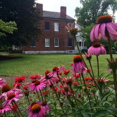 View of the Orlando Brown House from the Butterfly Garden where purple coneflower is in full bloom.