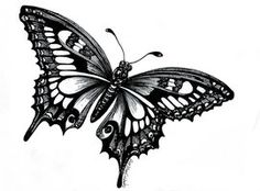 Black and White in May by Hector's House Craft on Etsy Black and White in May by Hector's House Craft on Etsy Gravure Illustration, Butterfly Drawing, Mens Butterfly Tattoo, Engraving Illustration, White Butterfly, Morpho Butterfly, Piercing Tattoo, Piercings, Future Tattoos