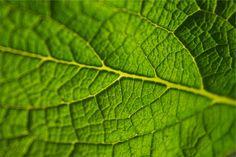 green leaf -  green leaf free stock photo Dimensions:2509 x 1673 Size:0.73 MB  - http://www.welovesolo.com/green-leaf/