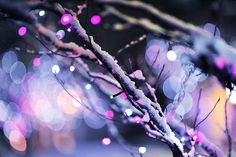 winter white images, image search, & inspiration to browse every day. Purple Christmas, Winter Christmas, Christmas Lights, Christmas Time, Winter Snow, Beautiful Christmas, It's All Happening, Winter White, Cover Photos