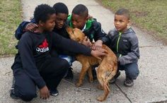 Four Boys Drop Everything To Save Abandoned Dog Tied With Bungee Cord