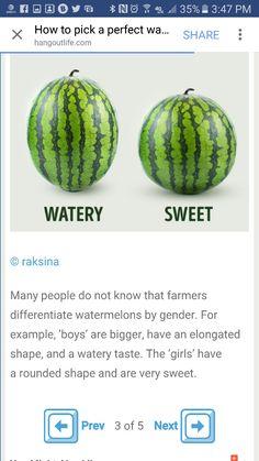 Choosing a watermelon (pt.3)