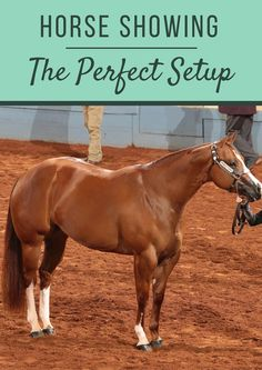 Train your young horse to set up with these five horse show halter tips.