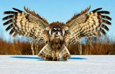 """""""Hybrid Animals"""" – Dowl These Animals Got Manipulated On Photoshop, And It's Totally Hilarious • Page 5 of 5 • BoredBug"""