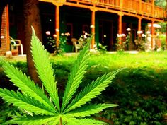 Say What? Marijuana Legalization Would Bring in How Much in Tax Revenue? (GWPH)