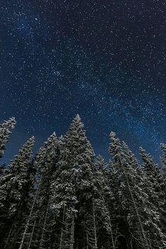 Pinos y estrellas