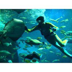 【haruna_kurage】さんのInstagramをピンしています。 《#ファインダー越しの私の世界 #一瞬だけの世界 #水族館 #新江ノ島水族館 #えのすい #相模湾大水槽 #ナイトワンダーアクアリウム2016 #魚 #海獣 #海洋生物 #アクアリウム #フタリウム #ノンフィルター #うおゴコロ》