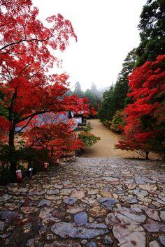 京都神護寺の金堂前から眺めた紅葉と五大堂と毘沙門堂
