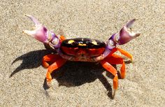 The colorful crabs pictured show that unique colors can add vibrance and punch to a design
