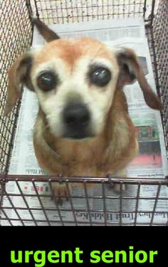 SAFE❤️❤️ DAINA (A1798907) I am a female tan and white Beagle mix. The shelter staff think I am about 10 years old. I was found as a stray and I may be available for adoption on 07/13/2016. — Miami Dade County Animal Services. https://www.facebook.com/urgentdogsofmiami/photos/a.474760019225073.115405.191859757515102/1234981136536287/?type=3&theater