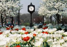 Downtown Downers Grove has an event for everyone! Come On In and see what our boutiques, cafes and restaurants have to offer you Classic Car Show, Classic Cars, Great Places, Places To See, Downers Grove, Unique Clocks, Train Station, Main Street, Towers