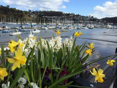 Springtime in Dartmouth, Devon. The gorgeous River Dart Dartmouth Devon, South West Coast Path, Landscaping Images, South Devon, Great View, Ladies Boutique, Small Towns, Spring Time, Amazing Women