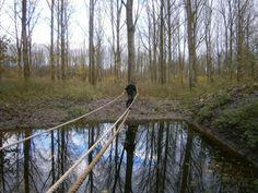 Op zaterdag 21-12-2013 organiseert Staatbosbeheer een trailrun: ''Ren de boswachter eruit BY NIGHT'' voor 3FM Serious Request. Doe je mee? Check http://staatsbosbeheerflevoland.wordpress.com/