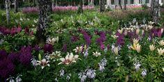 Авторский сад, мастерская Оксаны Хлебородовой Partial Shade Plants, Garden, Garten, Lawn And Garden, Gardens, Gardening, Outdoor, Yard, Tuin