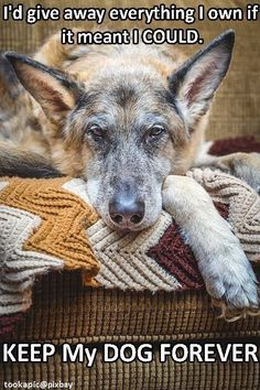 Snarky Funny German Shepherd | without question german shephard love german shepherds 3 shepherds fun ...