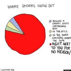 Where spiders hang out