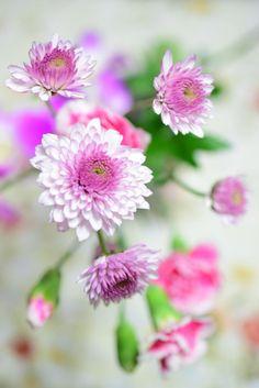 Gömülü resim için kalıcı bağlantı Pretty, Plants, Image, Flora, Plant
