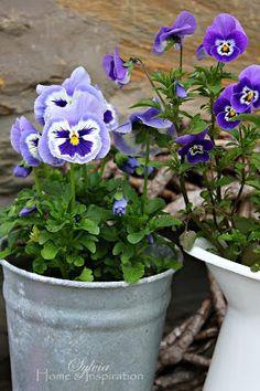 -Garden.. Garden Gates, Garden Art, Old Fences, Growing Vegetables, Pansies, Belle Photo, Purple Flowers, Container Gardening, Garden Landscaping