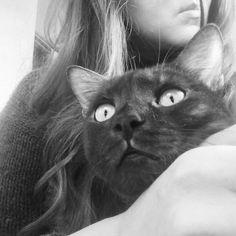 Cat, кот