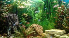 Aquarium met decoratie stenen en stuk kunst hout.