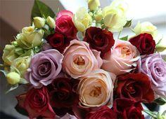 98250483_roses_3.jpg (460×333)