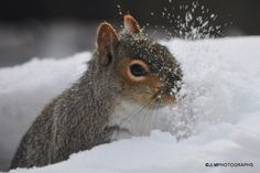 Squirrel playing in the snow... so cute :D