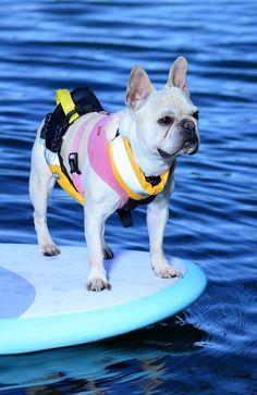 Paddleboard dog!